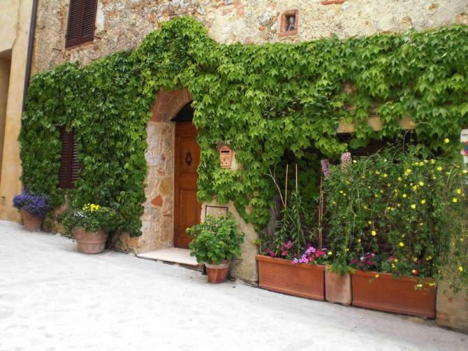 Ingressi decorati con piante e fiori creare verde for Edera rampicante
