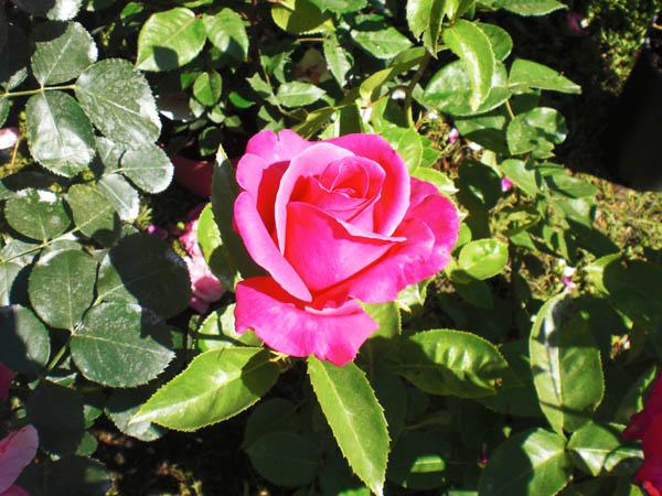 Franciacorta in fiore fiori e piante rare a bornato for Piante rare