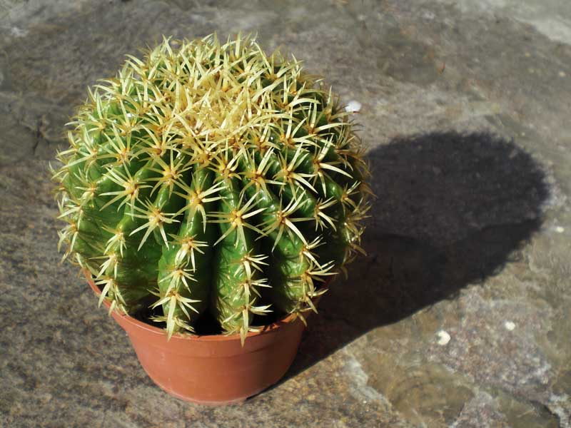 Piante grasse 22 consigli per prendersene cura - Le piante grasse si possono tenere in casa ...
