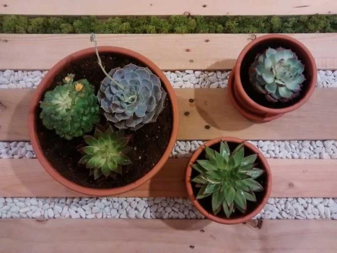 Idee vasi piante grasse piante grasse in tazza donna - Vasi per piante grasse ...