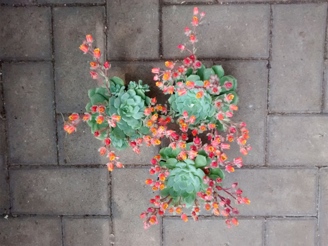 Piante grasse in inverno fuori free come allontanare le cimici verdi dalle piante in modo - Piante grasse da esterno in inverno ...